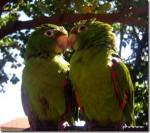Dating-Love-Birds_thumb.jpg
