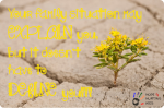 Quote-Flower-in-Rock_thumb.png